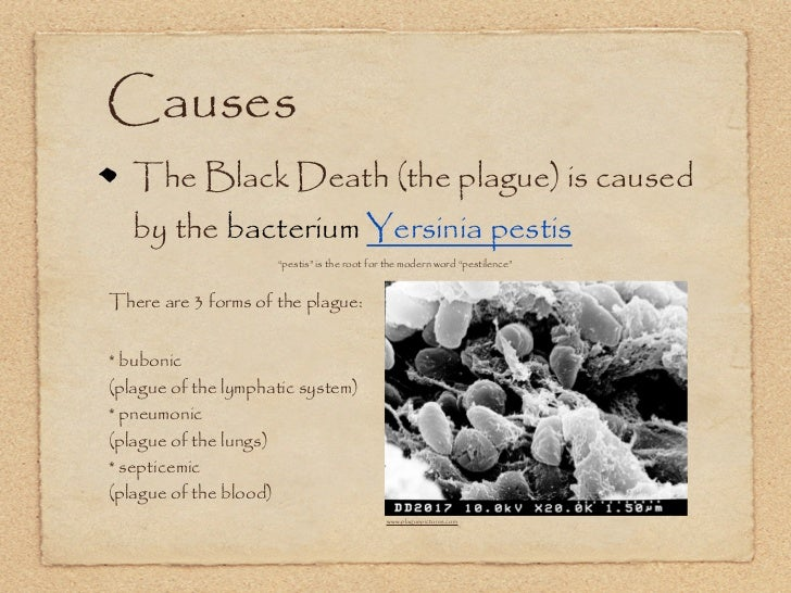 what did the black death cause