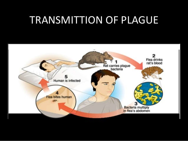 an overview of the bubonic plague of europe The bubonic plague mainly affects rodents, but fleas can transmit the disease   time before the outbreak of plague in china spread to western asia and europe.