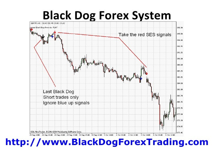 Black dog trading system forum