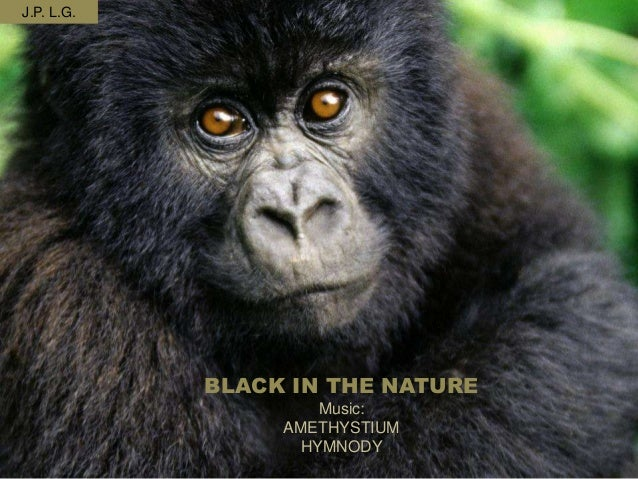 BLACK IN THE NATUREMusic:AMETHYSTIUMHYMNODYJ.P. L.G.