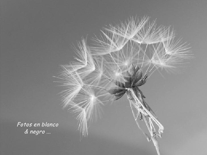 Fotos en blanco & negro ...