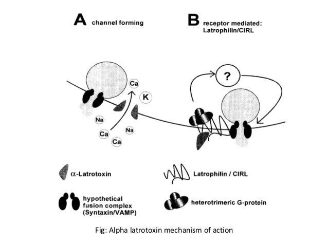 `fig: alpha latrotoxin mechanism of action