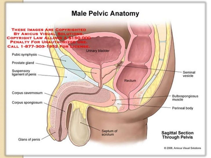 Anal sex and prostate cancer risk