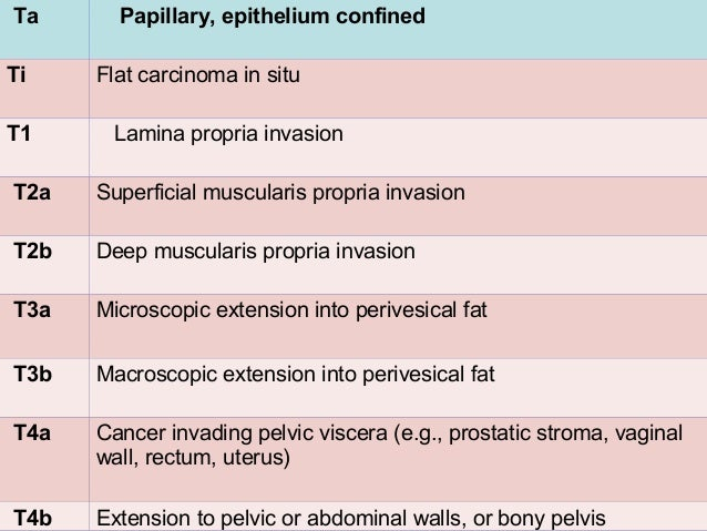 T1 • T1 tumors are usually papillary. • Nodular or sessile appearance suggests deeper invasion. • Increases the risk of re...