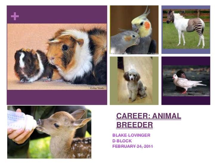 Career: Animal Breeder<br />Blake Lovinger<br />D Block<br />February 24, 2011<br />