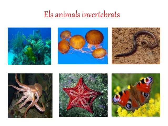 Els animals invertebrats.
