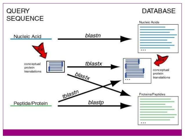 Bioinformatics part 4 Introduction to FASTA and BLAST ...