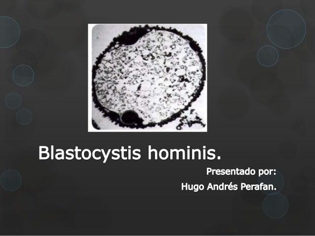 Taxonomía.Blastocystis Hominis.Reino: Protista.Filum: Heterokantophyta.Clase: Blastocystea.Orden: Blastocystida.Familia: B...