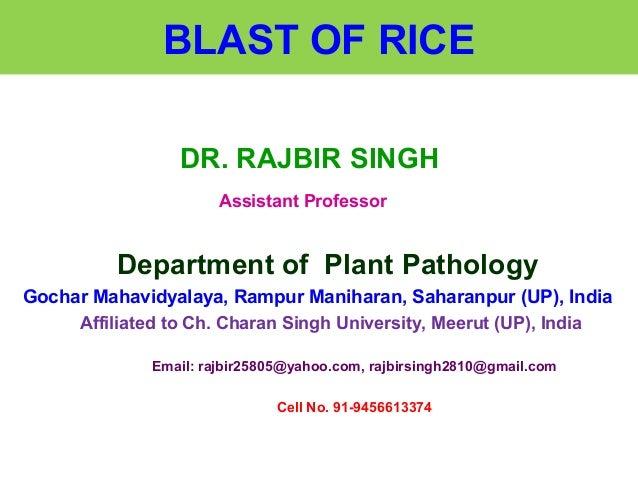 BLAST OF RICE DR. RAJBIR SINGH Assistant Professor Department of Plant Pathology Gochar Mahavidyalaya, Rampur Maniharan, S...