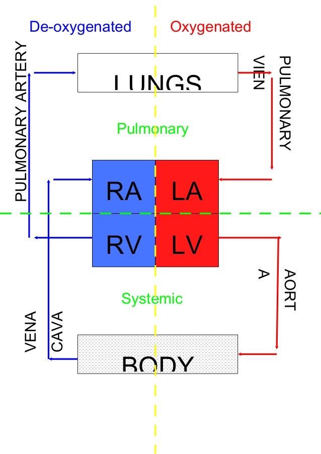 Block diagram of heart block diagram of heart de oxygenatedpulmonary artery oxygenated ccuart Images