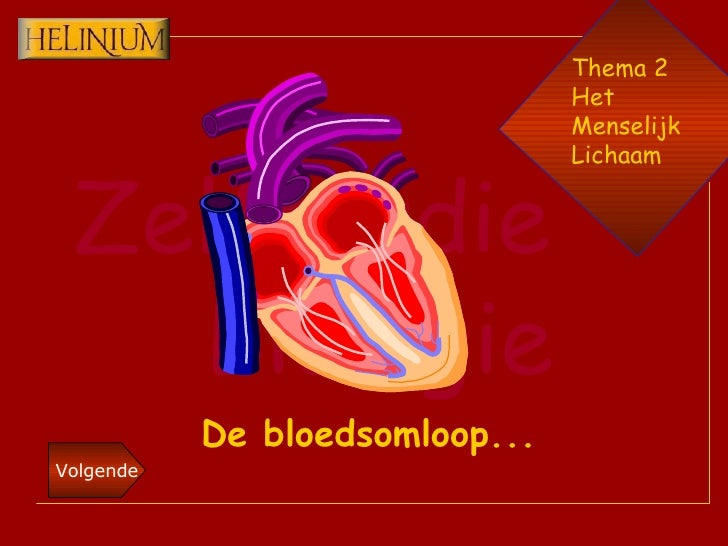 Thema 2 Het  Menselijk Lichaam De bloedsomloop...