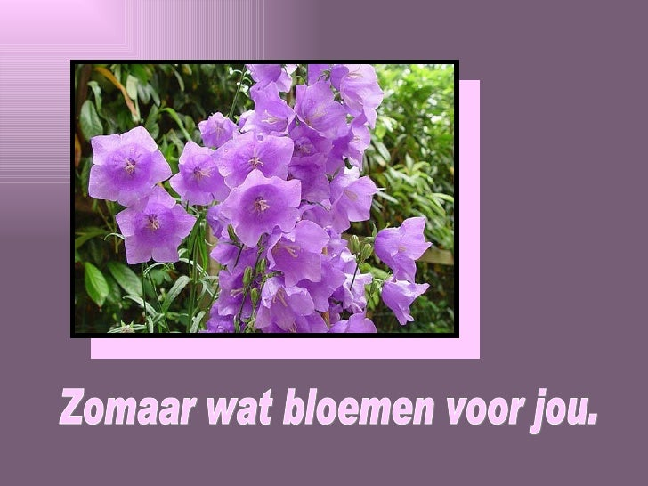 Extreem Bloemen Voor Jou JH-04