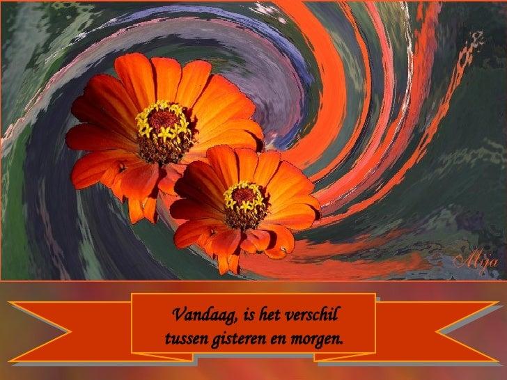 Citaten Over Bloemen : Bloemen en citaten