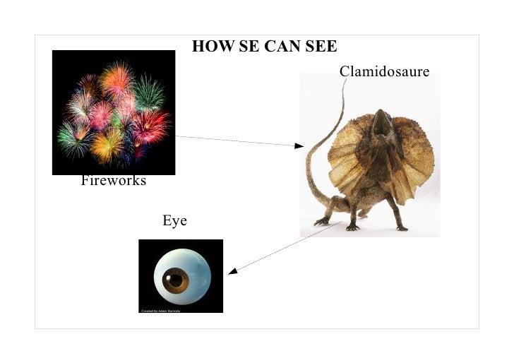 HOW SE CAN SEE                                    Clamidosaure     Fireworks              Eye