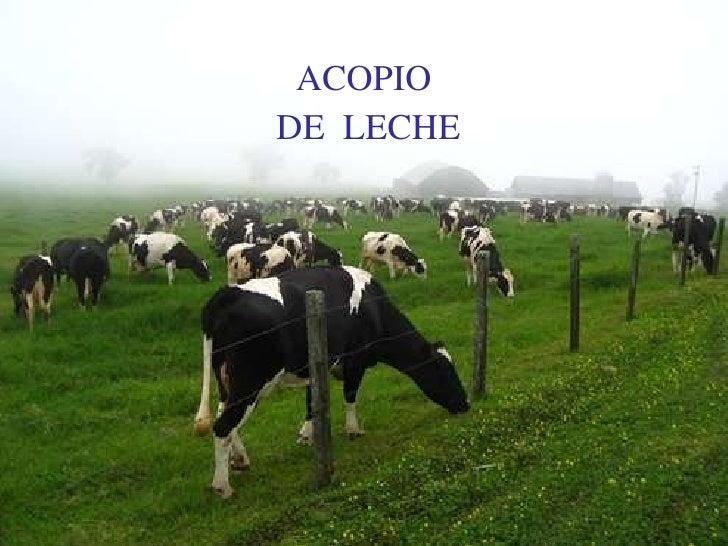 ACOPIO <br /> DE  LECHE <br />