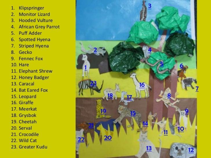 1. Klipspringer                                             32. Monitor Lizard3. Hooded Vulture4. African Grey Parrot5. Pu...