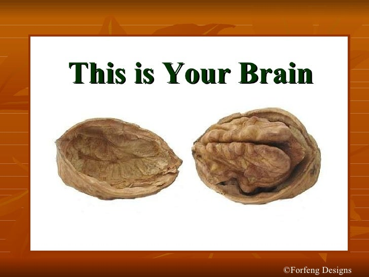 This is Your Brain ©Forfeng Designs