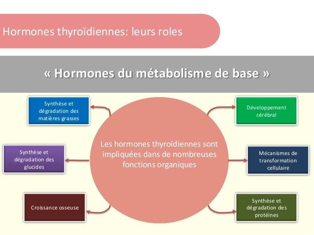 Hormones thyroïdiennes: leurs roles « Hormones du métabolisme de base » Croissance osseuse Développement cérébral Synthèse...