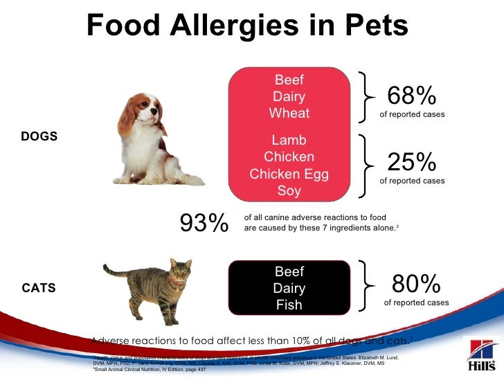 Best Meat For Dogs With Food Allergies