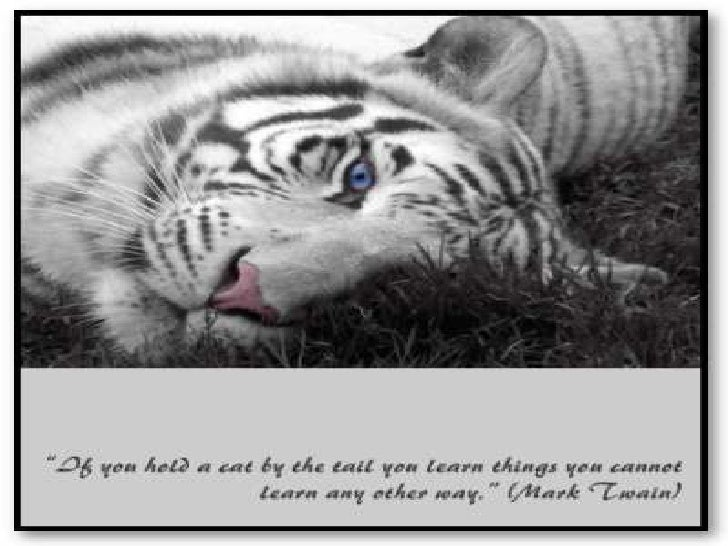"""""""If you hold a cat by the tail you learn things you cannot learn any other way.""""<br />"""