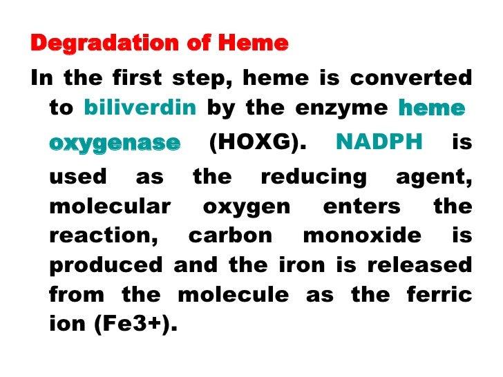 <ul><li>Degradation of Heme </li></ul><ul><li>In the first step, heme is converted to  biliverdin  by the enzyme  heme   o...