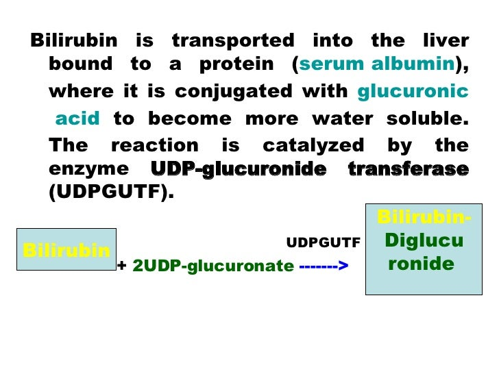 <ul><li>Bilirubin is transported into the liver bound to a protein ( serum albumin ), where it is conjugated with  glucuro...