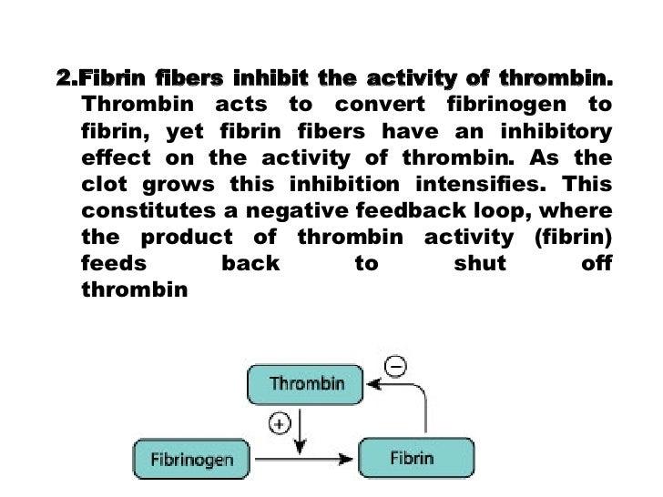 2.Fibrin fibers inhibit the activity of thrombin.  Thrombin acts to convert fibrinogen to fibrin, yet fibrin fibers have a...