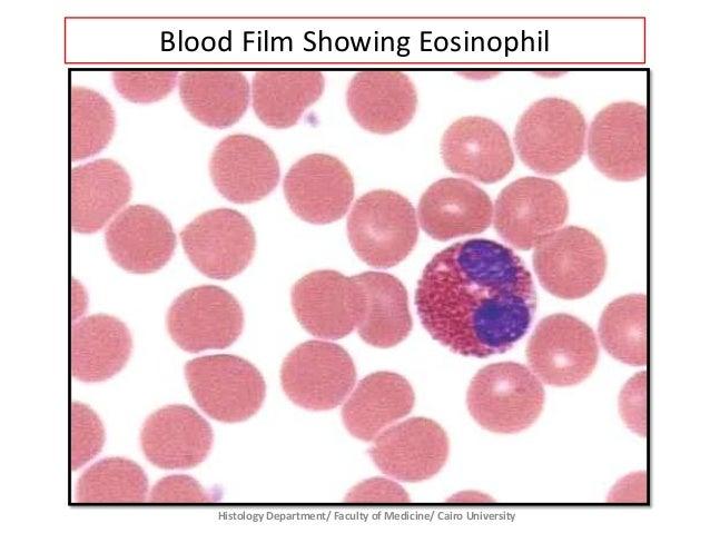 Blood - Prac. Histology