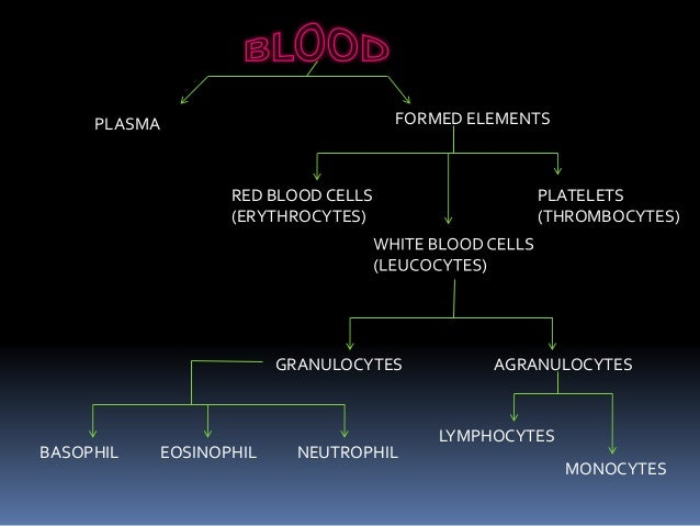 circulation of body fluids