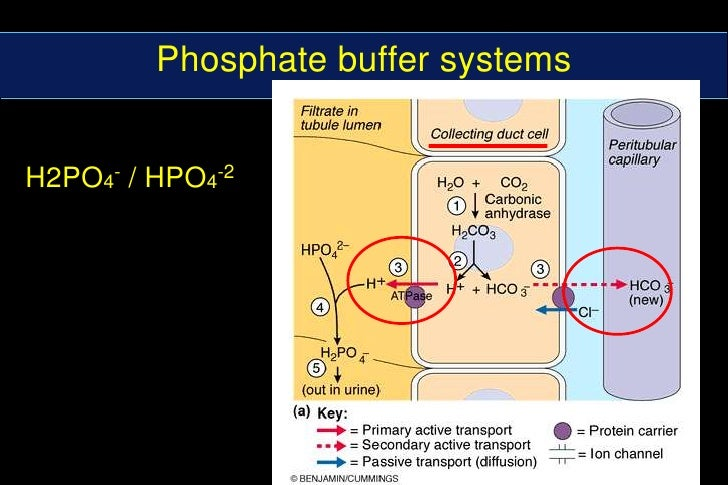 buffer systems Objectives • reinforce concepts of buffer, buffer range and buffer capacity •  learn how to prepare acid-base buffers • learn how to calculate the ph of a  buffer.