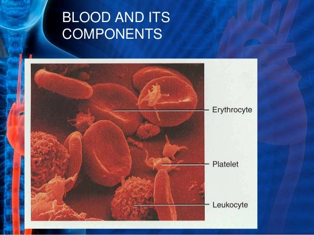 Blood and its components Slide 2