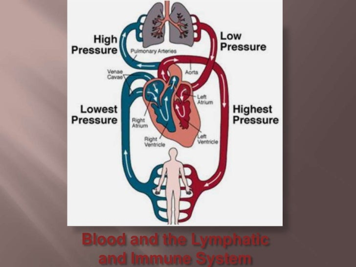 Blood and the Lymphatic and Immune System<br />