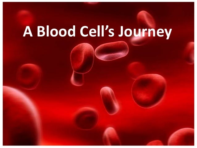 A Blood Cell's Journey