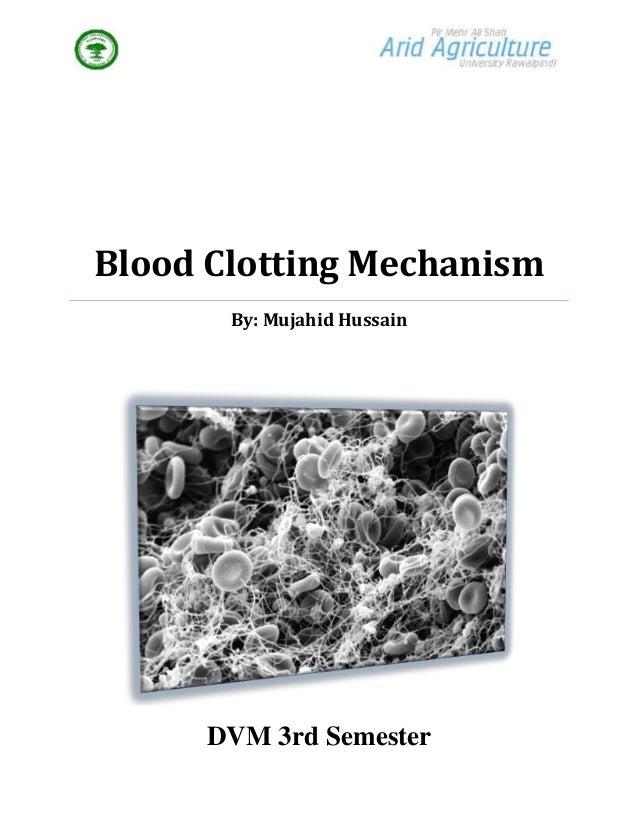 Blood Clotting Mechanism       By: Mujahid Hussain      DVM 3rd Semester