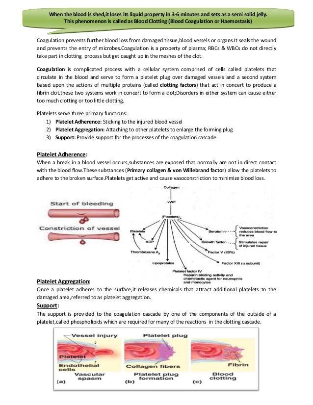 blood clotting 2 essay A weekly snapshot of the hottest studies from blood, the official journal of the american society of hematology (ash), hand-picked from each issue by the editors, bob löwenberg, md, phd and nancy berliner, md.