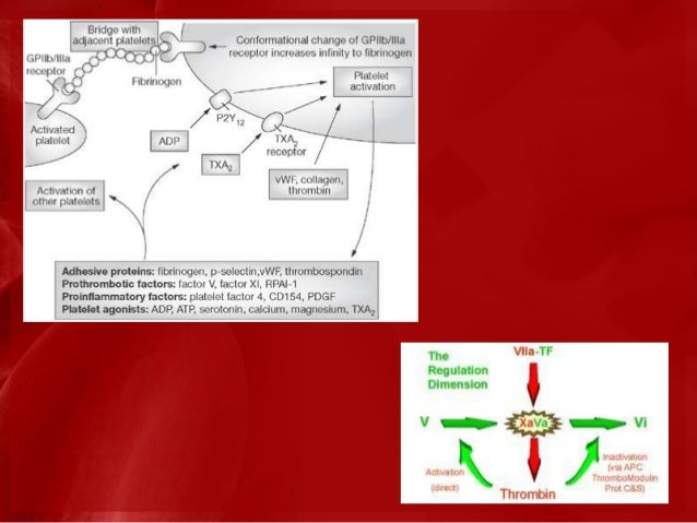 Clinical Features of Bleeding Disorders                                    Platelet disorders Coagulation                 ...