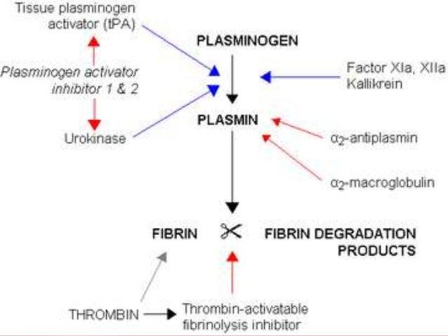 TT Prolongs..1. Hypo- afibrinogenaemia2. Dysfibrinogenaemia3. Non fractionated heparin4. Fibrinogen/ fibrin degradation pr...