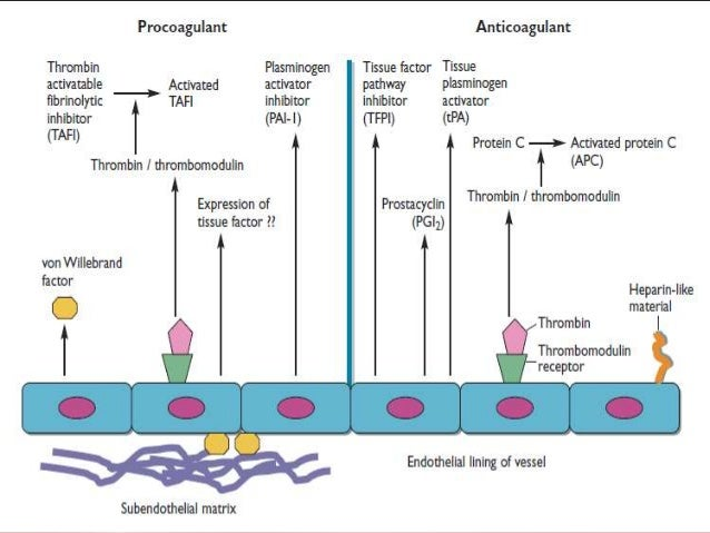BleedingDisorders            Inherited            •   Vascular            •   Platelet            •   coagulation         ...