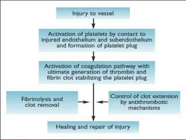 Vascular Phase