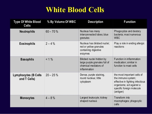blood formation and composition