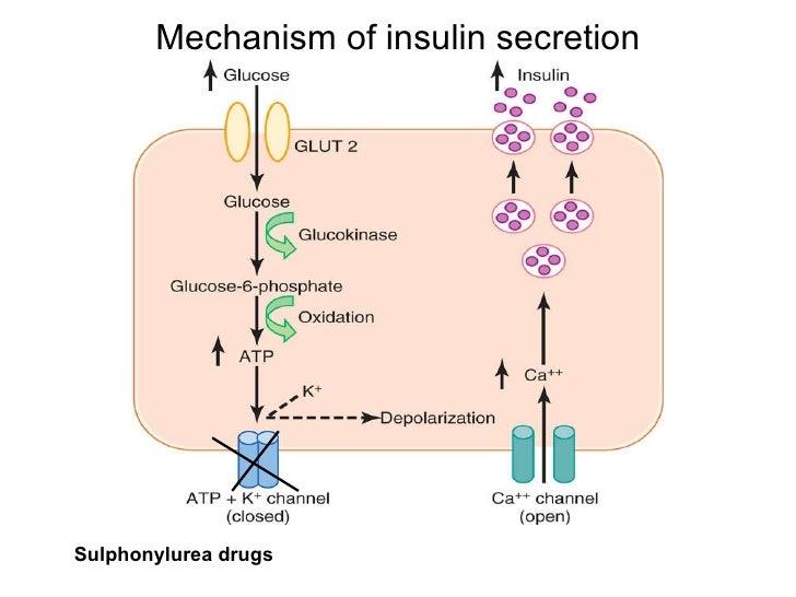 Blood Glucose Regulation Lab Essay Sample