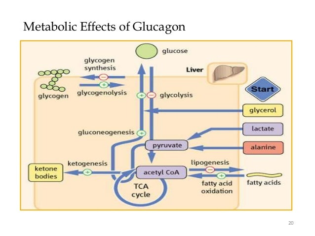 anabolic process of carbohydrates