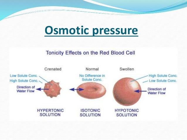 Blood Physiology - Ppt