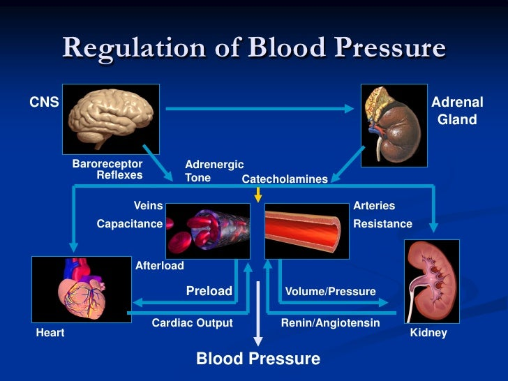 blood pressure regulation essay Learn about three lifestyle changes that will help control your blood pressure get blood pressure facts from the cdc, the premier us public health agency.