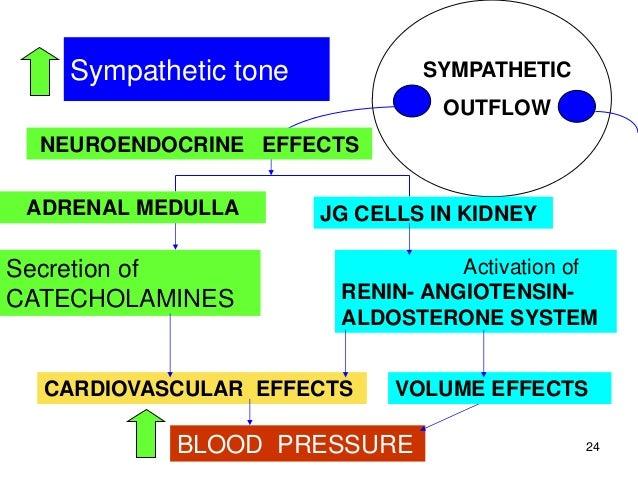 Blood Pressure Regulation 2013