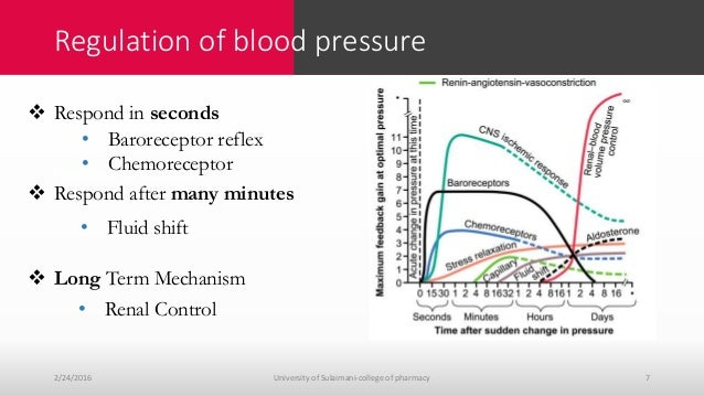 Blood pressure regulation and hypertension