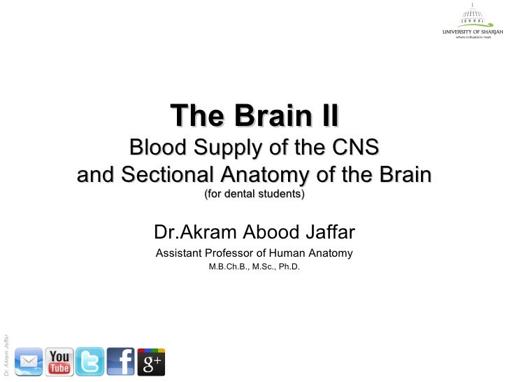The Brain II                        Blood Supply of the CNS                   and Sectional Anatomy of the Brain          ...