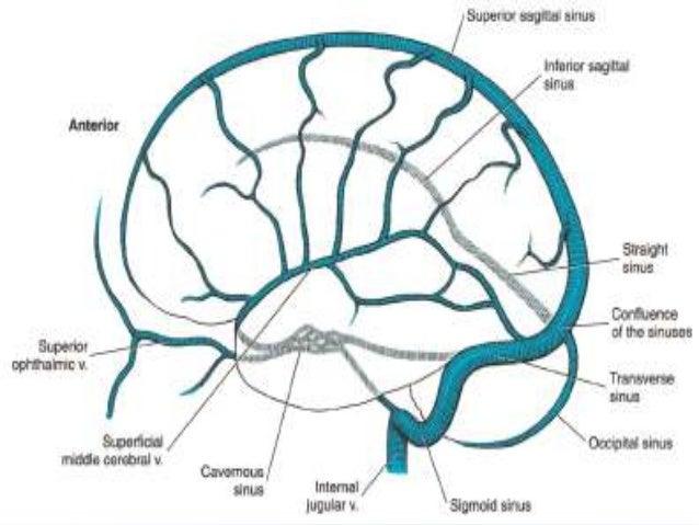 Blood supply of brain (2)