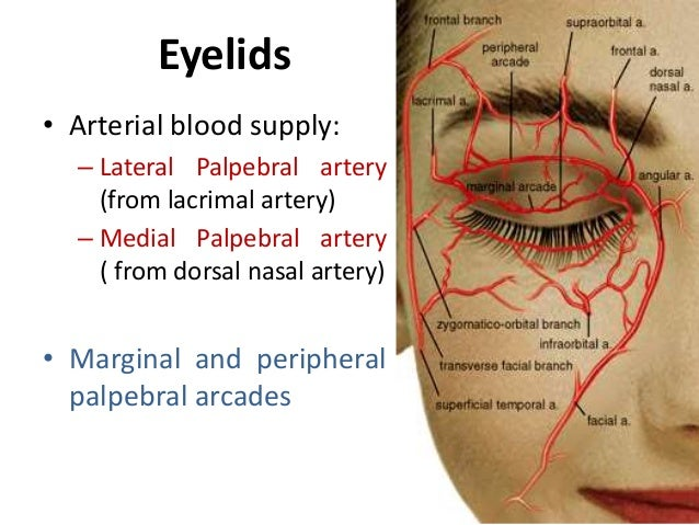 Blood Supply Of Eye and Optic Nerve