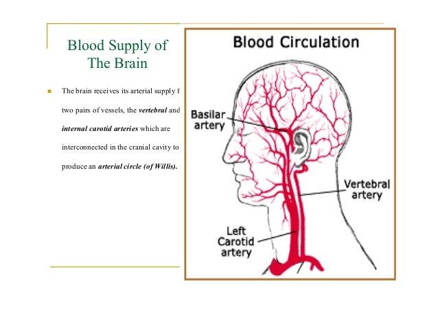 The Circulation Of Brain Diagram - Block And Schematic Diagrams •